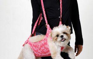 7 интересных аксессуаров для собак