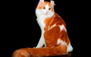 Фелинотерапия: кошки помогают