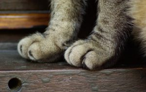 Беременность у кошки