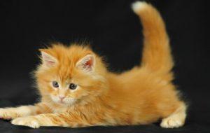 Как правильно ухаживать за кошками?