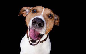 Почему не нужно давать собаке целовать вас