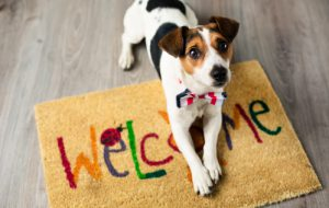 Важные правила для владельцев домашних животных