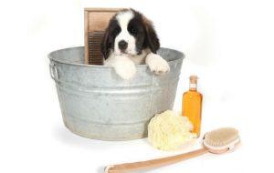 Как сделать домашний шампунь для собак?