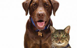 Самые популярные породы кошек и собак: кого выбрать?