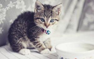 Котенок не пьет воду: причины, почему это происходит?