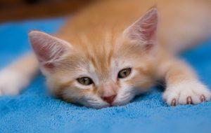 Что делать, если котенок не ест и не пьет?