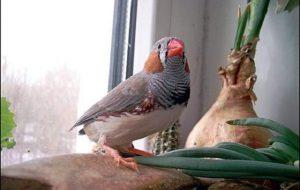 Какую птицу завести?