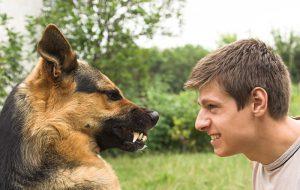 Агрессия у собак — по какой причине