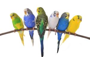 Как выбрать клетку для комнатных птиц