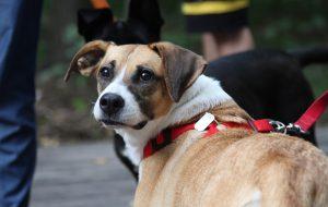 Выгул собак – правила этикета