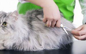 Гигиеническая стрижка собак и кошек