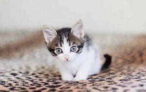 Заболевания кожи у кошек