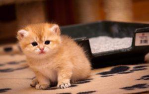 Сколько раз в сутки котята ходят в туалет