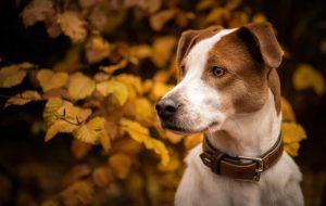 Ошейники для собак — как выбрать нужный?