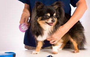 Уход за собакой: общие рекомендации по уходу