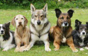 Что такое собака: понятие, классификация пород