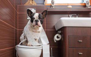 Запор у собаки: что делать в домашних условиях?