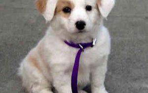 Как назвать мальчика-собаку?