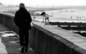 Выгул собак: правила этикета