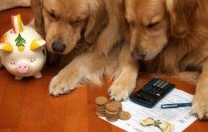 Введение налога на домашних животных в 2018 году