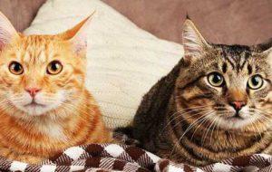 Шерсть, уши, глаза кошки и еще 5 признаков здоровья питомца