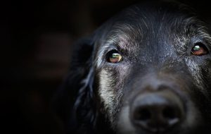 Сколько лет живут собаки?
