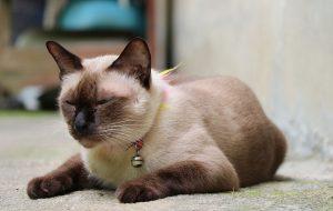 Как избавиться от клещей и блох у кошки?