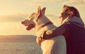 Когда и как собака стала другом человека?