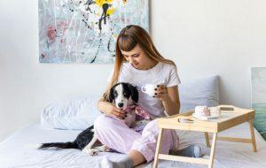 Чем опасен шоколад собакам и кошкам?