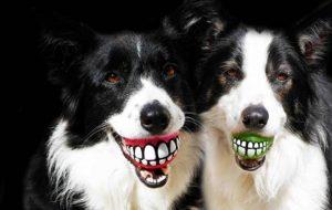 Необычные вещи для собак