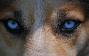 Собака все видит черно-белым?