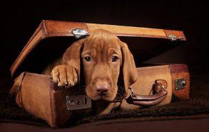 Взять собаку в путешествие