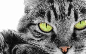 Почему кошки линяют? Возможные причины обильной линьки у кошек
