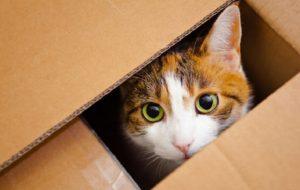 Каким должен быть уход за кошками?