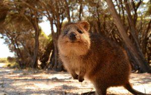 9 самых милых диких животных в мире