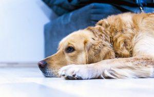 Основные причины диареи у животных