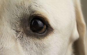 Какое зрение у собак? Какие цвета они видят?