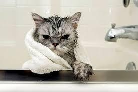 Как правильно купать котенка если он боится воды