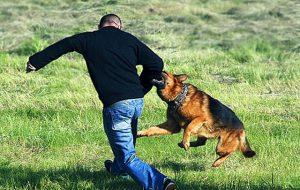Собака бывает кусачей или как обезопасить себя от нападения