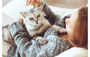 Вакцину от аллергии на кошек будут давать самим кошкам