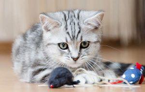 Безболезненное лечение зубов у кошек и собак