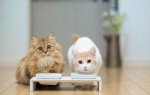 Мейн-кун. Кто рискнет завести кота-гиганта?