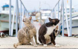 Лишай у кошек: лечение в домашних условиях лекарствами и народными средствами