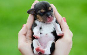 Когда открываются глаза у щенков? Почему щенки рождаются слепыми? Можем ли мы помочь открытию глаз у щенков?