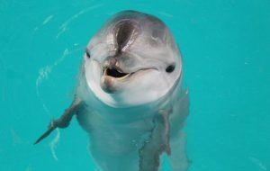 Как дрессируют дельфинов? Будет вам и рыбка, будет и свисток