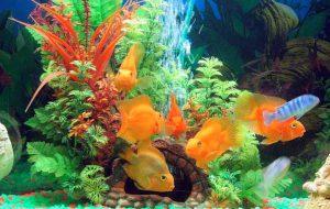Как выбрать свой первый аквариум?