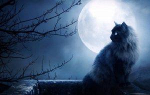 Животные в наших снах: что пытается сказать подсознание?