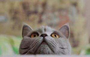 Стоит ли избавляться от кошки, из-за страха заразиться токсоплазмозом?