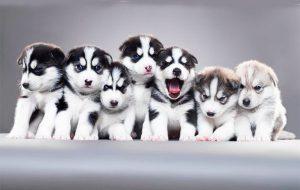 Разведение щенков- прибыльный бизнес