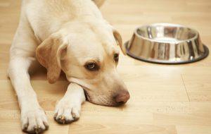 Собака плохо ест сухой корм
